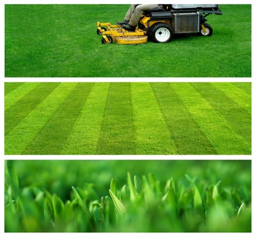 Lawn and garden services business plan
